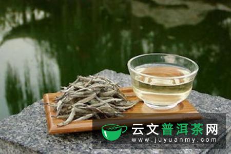 我的茶味生活——品白茶
